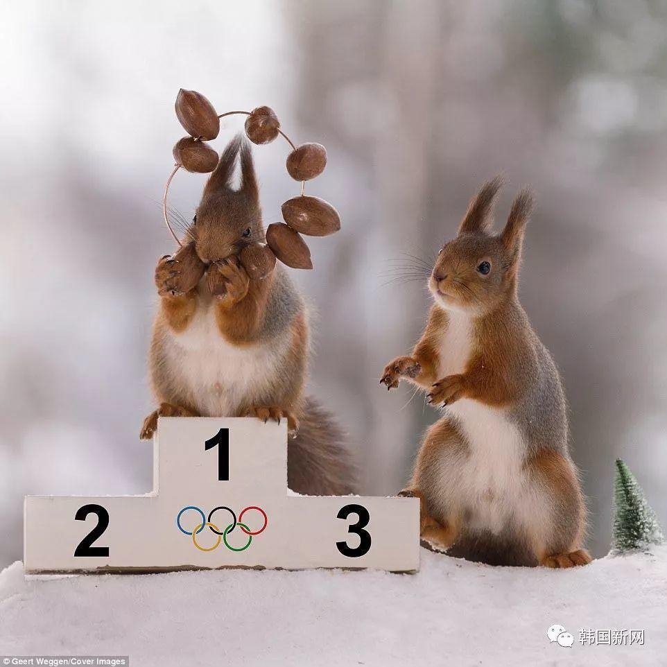 瑞典摄影师捕捉可爱一幕 松鼠变身奥运会选手