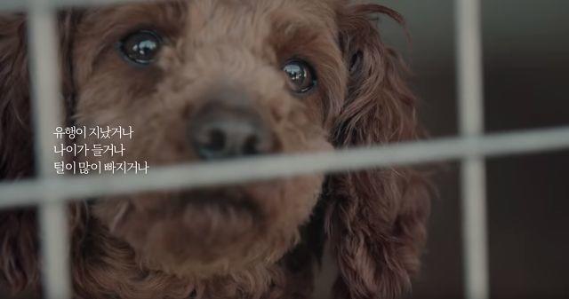 点击量破千万! Gmarket公益短片:《不要抛弃宠物狗》